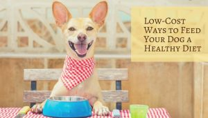 Feed Your Dog a Healthy Diet