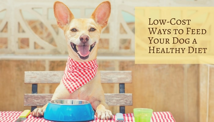 Best Healthy Dog Food For A Good Price