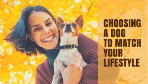 Choosing a Dog to Match Your Lifestyle