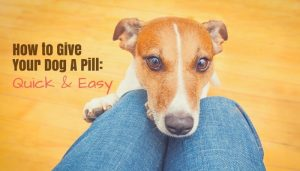 How to Give Your Dog Pills - Quick and Easy