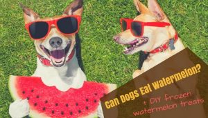 Can Dogs Eat Watermelon and Watermelon Seeds?