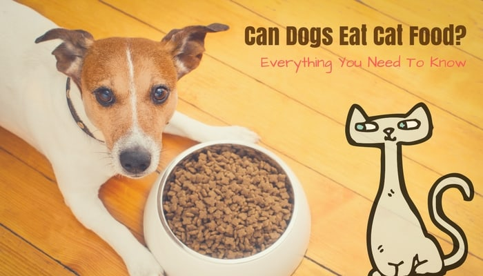 Can Dogs Eat Cat Food?