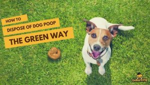 Dispose of Dog Poop the Green Way