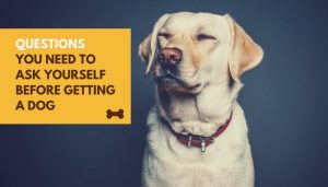 Questions You Need To Ask Yourself Before Getting A Dog
