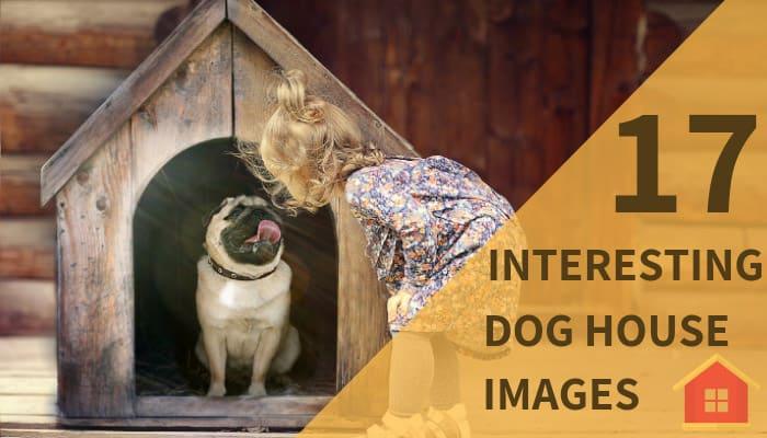 Interesting Dog House Images